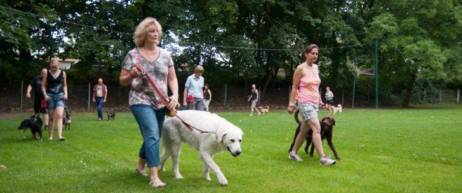Erwachsene Hunde Hundesportverein Dresden Neustadt
